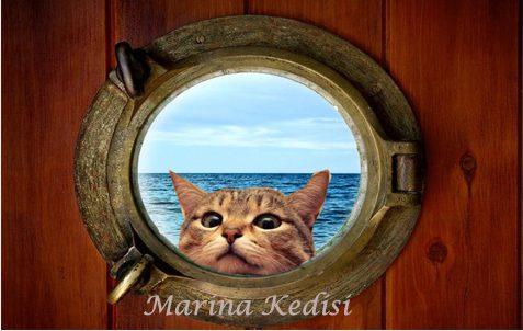 Marina Kedisi
